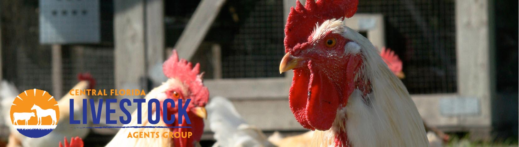 Poultry Header 34