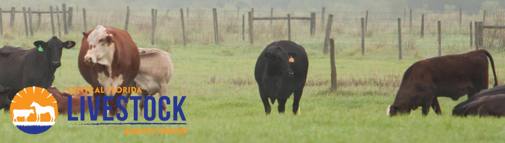 Small Cattle Farm Header 37