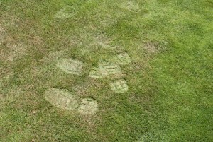 Footprints in turfgrass are a common symptom of drought stress. They are the result of a loss in turgor pressure, due to lack of water, in plant tissue.