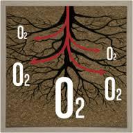 root oxygen