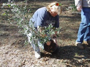 Removal of the container and inspection of the rootball is critical to tree survival.