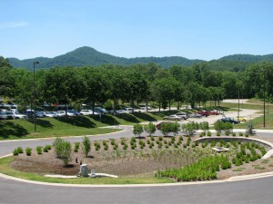 The North Carolina Arboretum used a planted bioretention area to manage stormwater in their parking lot.  Photo courtesy Carrie Stevenson