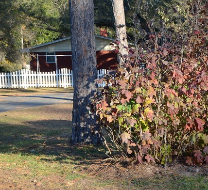 Even though the lawn and landscape are going dormant, there is much which can be done now to prepare for Spring 2015.