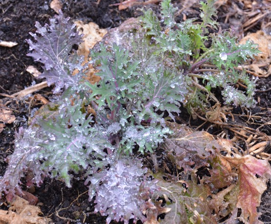 Some plants will handle freeze events, while other will wither and die.  Advance preparation will improve chances of saving sensitive plants from subfreezing weather.
