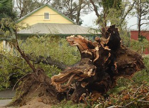 Hurricanes can have serious impacts on trees in their path. Photo credit: Pensacola News Journal