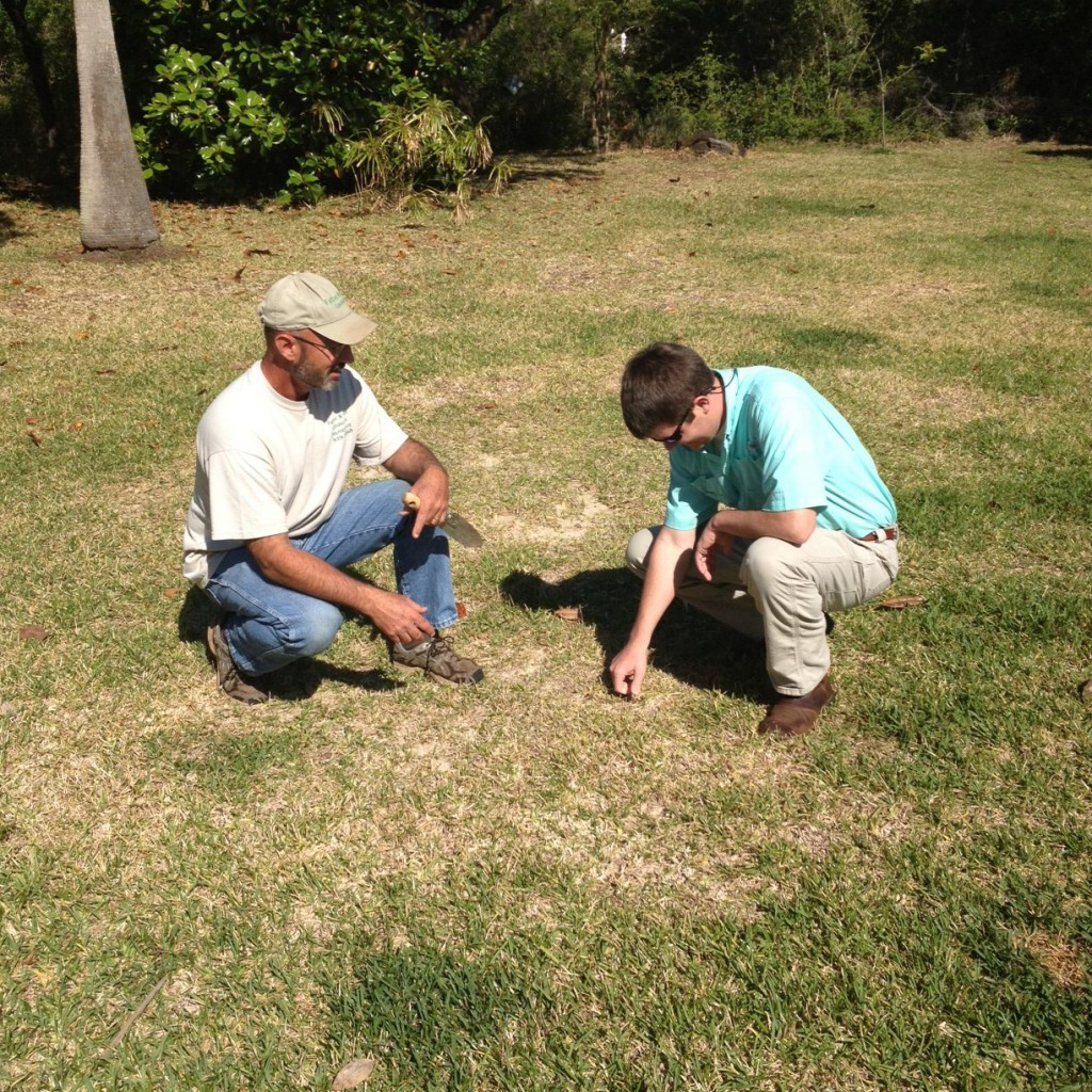 Contact your local UF/IFAS Extension Agent for lawn recommendations, Photo Credit: Blake Thaxton