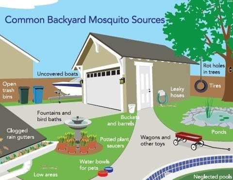 mosquito hot spots