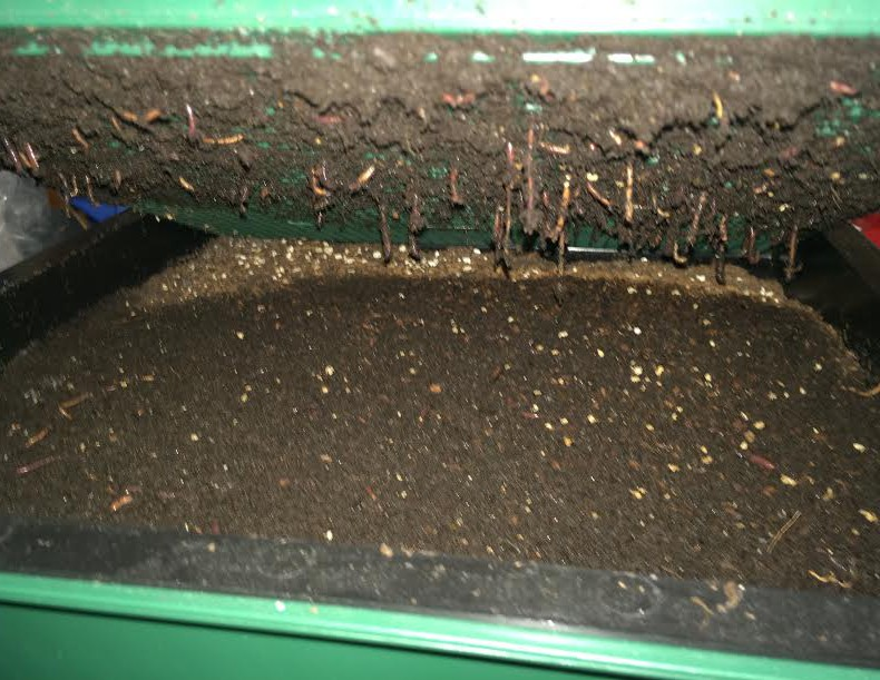 vermicompost layer mcj