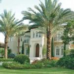 Medjool Palm Landscape