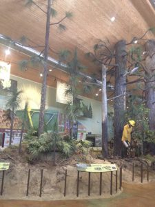 The longleaf forest display at the E.O. Wilson Biophilia Center shows typical vegetation and wildlife in the forest. Photo credit: UF IFAS Extension