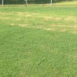Bermudagrass lawn cut at half-inch different height. Photo: Julie McConnell, UF/IFAS