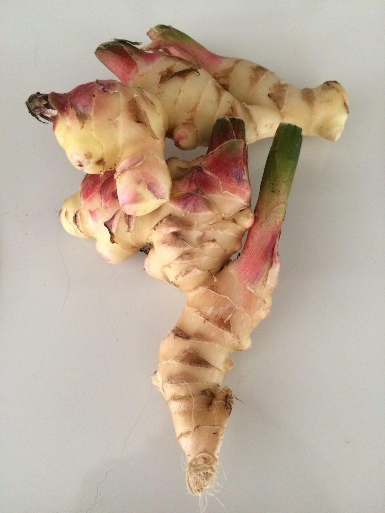 Fresh ginger rhizomes.