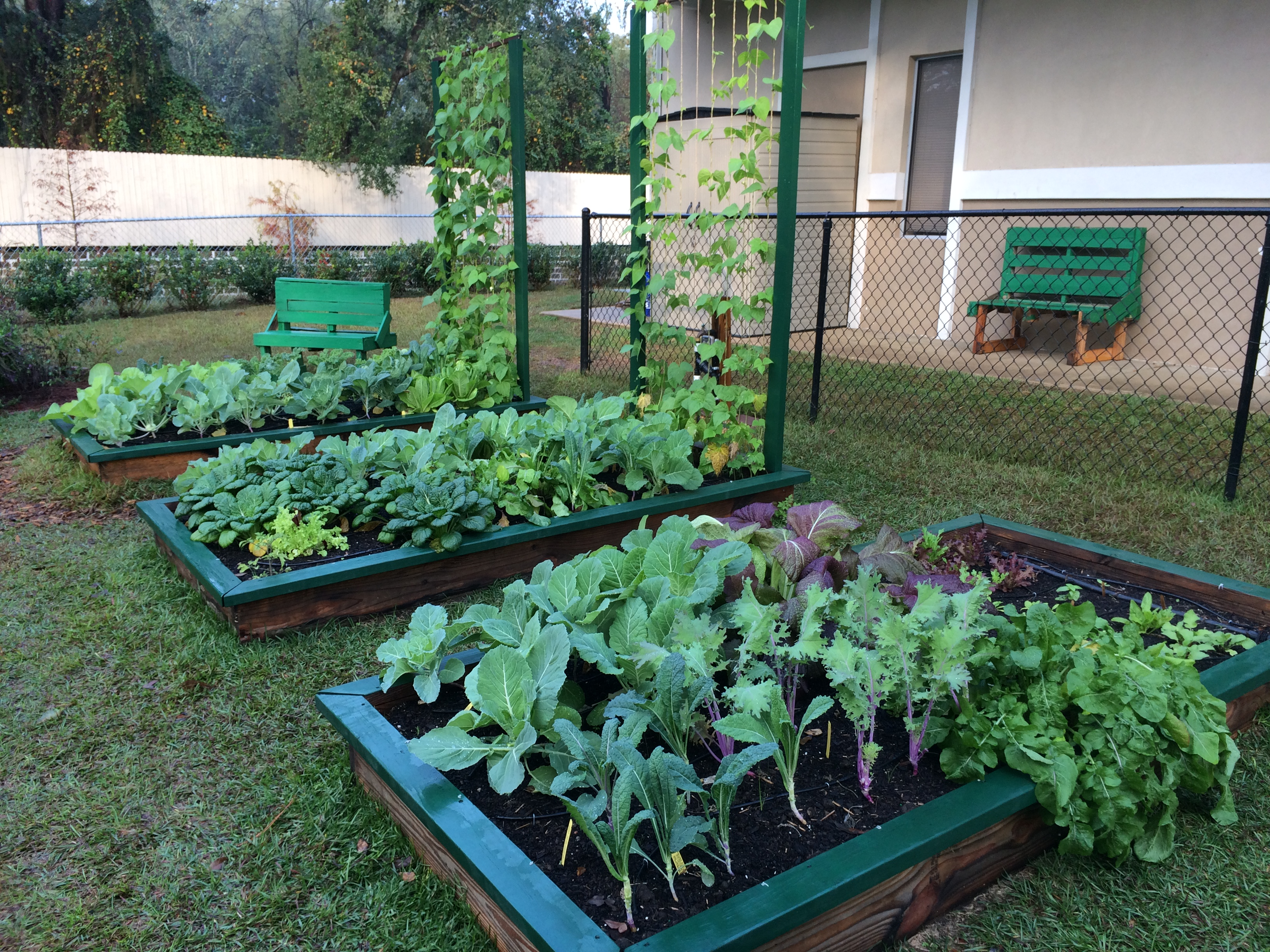 Raised Bed Gardening 101 - UF/IFAS Extension Leon County on Gardening  id=36596