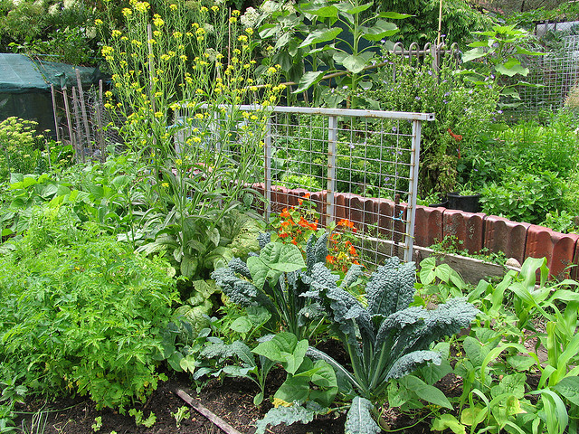 a mix of vegetable plants
