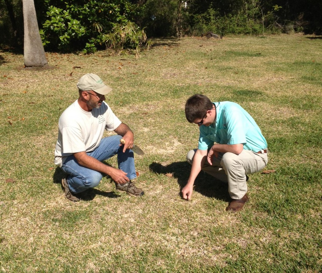 UF/IFAS Extension working with horticulture professionals scouting turf problems. Photo Credit: Blake Thaxton