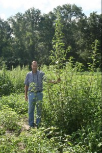 """Palmer amaranth can reach heights up and signal real trouble for hunters, farmers, and land managers. Loaded with numerous small seeds, mature plants and """"offspring"""" difficult to control. Photo Courtesy of University of Florida / IFAS"""
