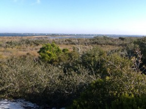 From atop a tertiary dune you can view the maritime forest, salt marsh, and sound beyond. Photo: Rick O'Connor