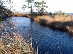 This freshwater pond has bull minnows, amphibians, snakes, and - in the past - alligators.  Photo: Rick O'Connor