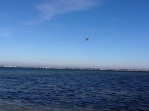 This pelican is searching over Santa Rosa Sound for a fish to feed on.  Photo: Rick O'Connor