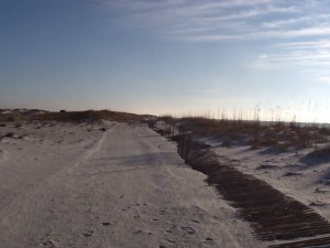 Primary dune line with sand fencing.  Photo: Rick O'Connor