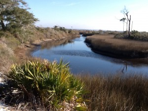 A finger of a salt marsh on Santa Rosa Island.  The water here is saline, particularly during high tide.  Photo: Rick O'Connor