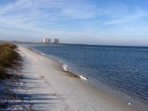 The darker areas in the water are seagrasses.  Photo: Rick O'Connor