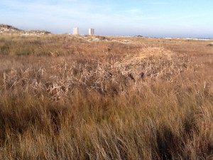 Swale with dead cattails.  Photos: Rick O'Connor