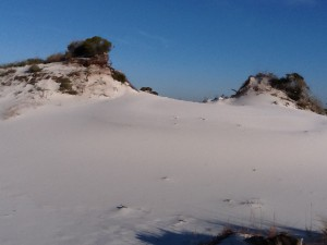 Tertiary dunes are the largest dunes on the island; some reaching over 50'.