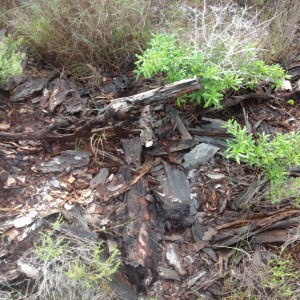 A decomposing log is a microhabitat for many organisms. Photo: Rick O'Connor