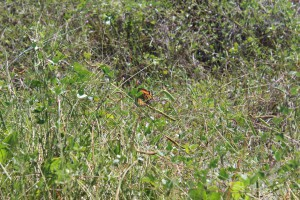 The majestic monarch butterfly stopping along the panhandle on its way to Mexico. Photo: Molly O'Connor