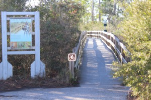 At the kayak launch at Johnson's Beach is a short trail through the dunes of Perdido Key. You will be able to view a variety of plants and birds, or maybe, as I did, find a large coachwhip basking on a dune.