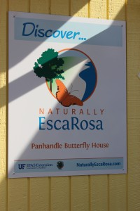 Butterfly house NER