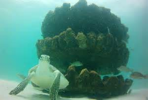 This sea turtle frequents the nearshore snorkel reef at Park East in Escambia County.  Photo: Robert Turpin
