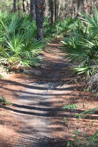 One of the many Florida State Forest trails in South Walton.