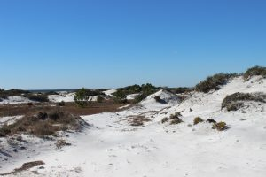 The spectacular dunes of south Walton County.