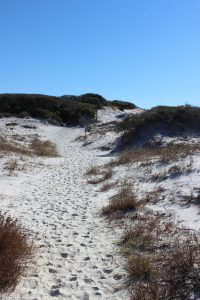 Dune trail at Grayton Beach State Park