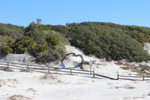 The wind sculpted plants of the tertiary dunes.