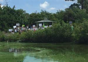 A large algal bloom in a south Florida waterway. Photo: University of South Florida News