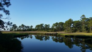 Sea level rise will convert coastal slash pine forest to salt marsh. Photo credit: Erik Lovestrand, UF IFAS