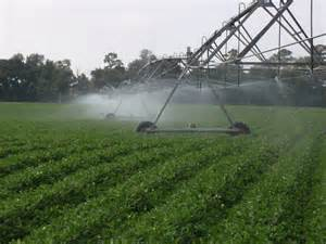 This is a common method used to irrigate crops across the U.S. Photo: UF IFAS