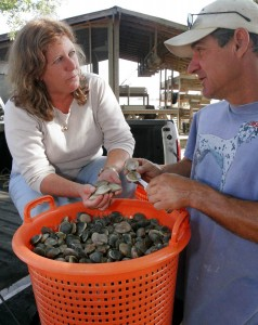 Leslie Sturmer, left, an aquaculture extension agent with the University of Florida's Institute of Food and Agricultural Sciences, checks clams with Mike Hodges, owner of Hodges Seafood Company in Cedar Key, Monday April 10, 2006. Hodges, who harvests 15 to 20 baskets of clams a week every week of the year, has worked closely with Sturmer to build the clam industry in the Gulf Coast village. (AP Photo/University of Florida/IFAS/Thomas Wright).