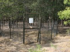 Corral trap with rooter gate.