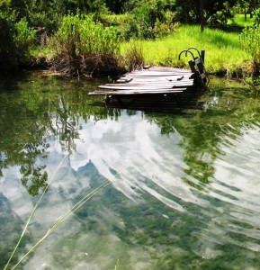 """Warm temperatures and longer days have kicked pond productivity into """"high gear."""""""