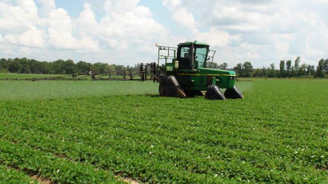 Peanuts Receive Second Fungicide Application