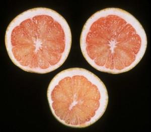 Citrus calcium defficiency