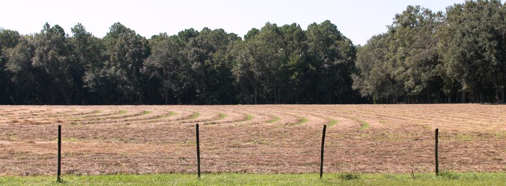 Recently cut hay in Washington County should be tested to determine quality
