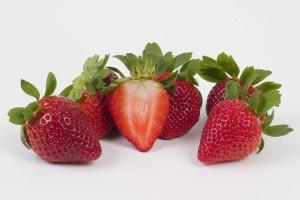 UF Florida Radiance Strawberry