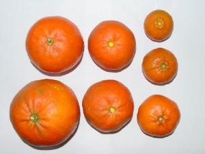 citrus potassium deficiency