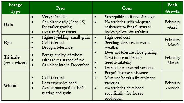 small grain comparison