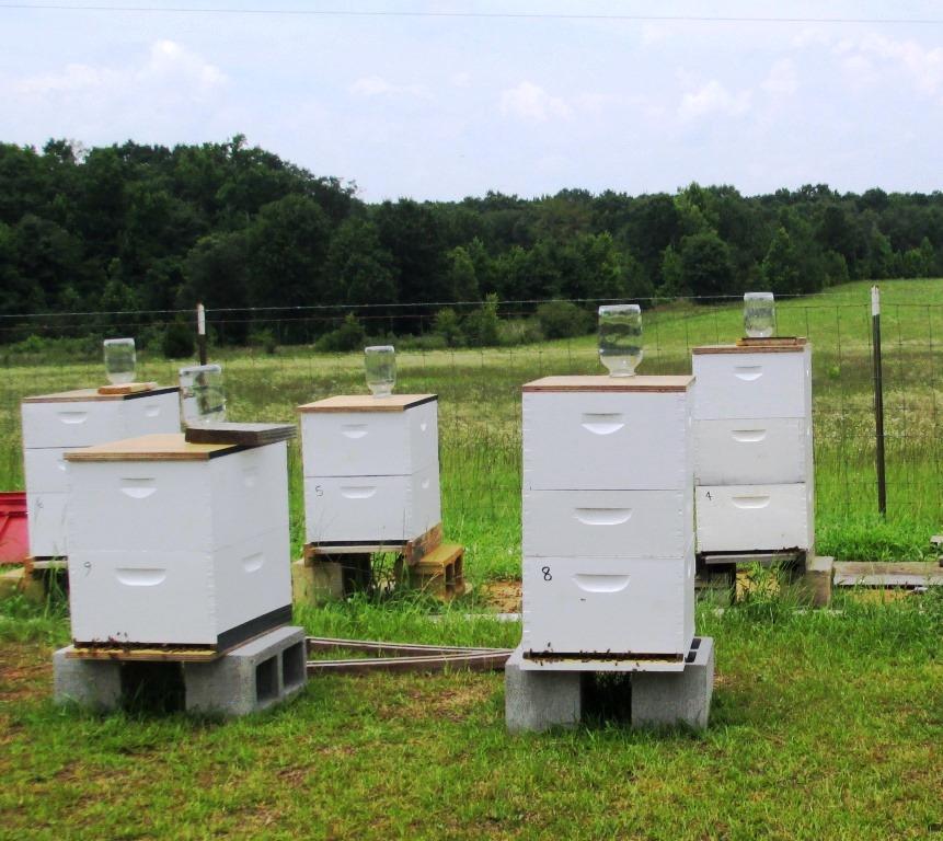 Hive feeding.  Photo credit:  Doug Mayo